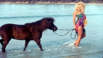 Pamela Anderson luchar por los animales 