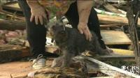 Perrito sobrevive a tornado de Oklahoma 