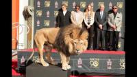 León de MGM dejó huellas en Hollywood